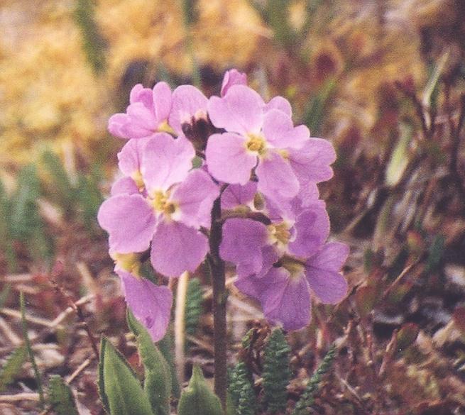 wildflower june 7