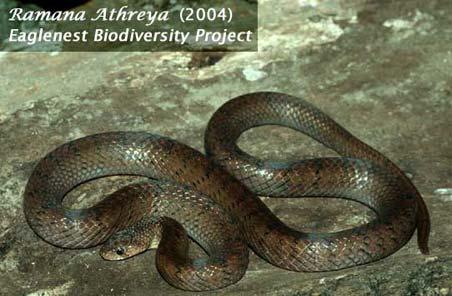Birding Hotspots of W. Arunachal Pradesh